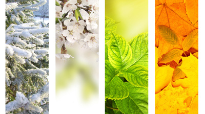 A collage of four pictures representing winter, spring, summer, and fall respectively.
